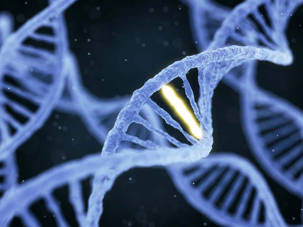 Photo of Fast DNA Replication Can Destroy the Cancer Cell