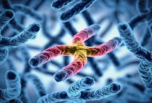 Photo of Scientists detail how chromosomes reorganize after cell division
