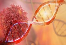 Photo of New Study Reveals Junk DNA is Not Selfish