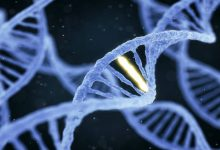 Photo of Scientists discover function of DDX11 gene in Warsaw breakage syndrome