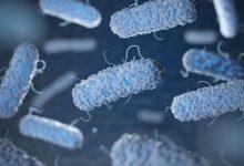 Photo of New Method To Fight Drug Tolerant Bacteria