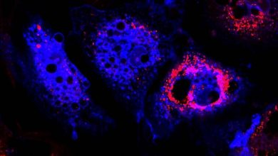 Photo of Immune system discovery could aid quest for stem cell therapies