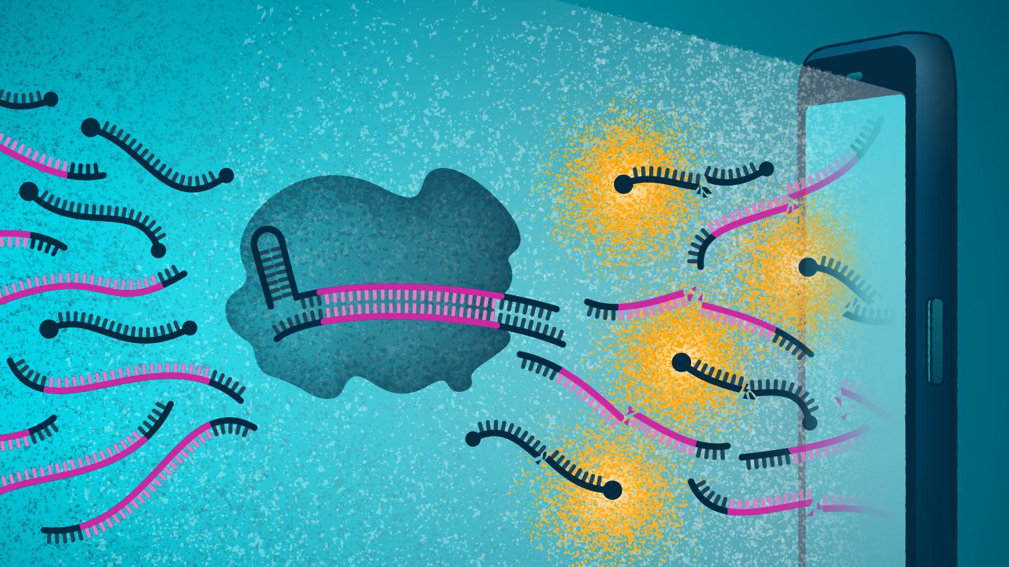 CRISPR-based test